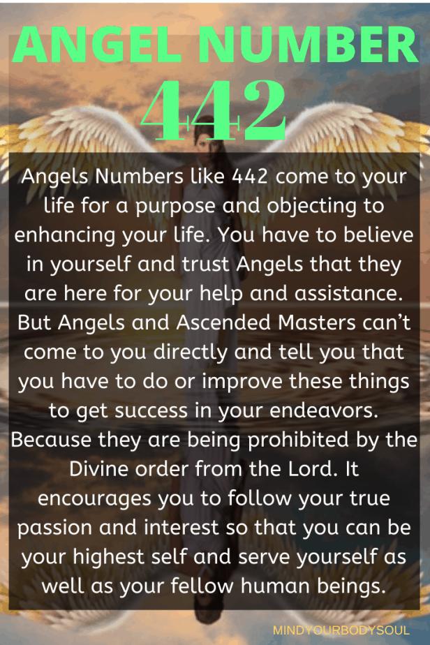 442 Angel Number