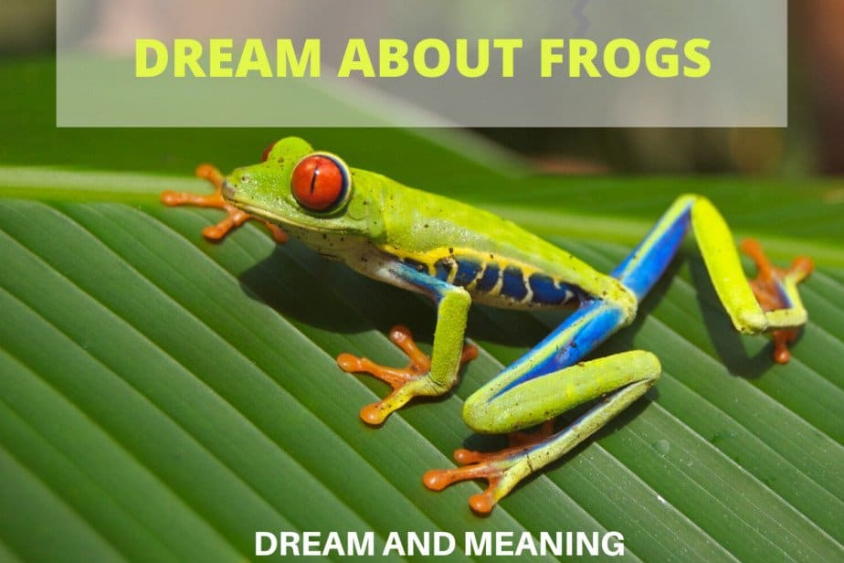 dream about frogs
