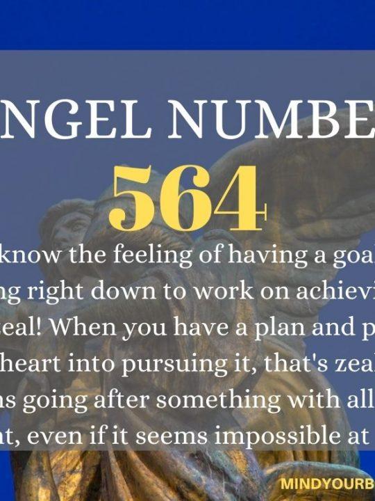 564 Angel Number